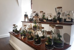 Plants terrariums.