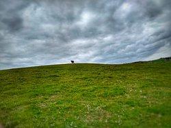 Crossing a field on safari