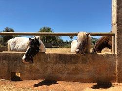 Pony-Reiten für Kinder