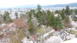天守からの桜です