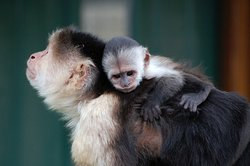 Monkey Haven
