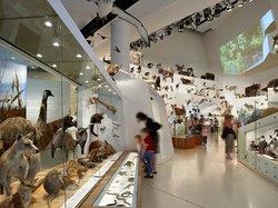 墨爾本博物館