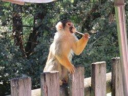 un petit singe a prit une sucette a un petit garçon!