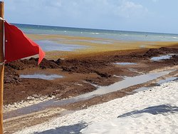 Seaweed on Beaches