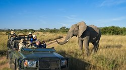 A friendly greeting on a game drive