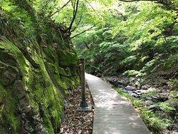 Jigokudani Walking Path