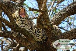 Amazing Memories Safaris