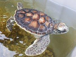 Discover Marine and Wildlife Eco Centre