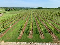 Well manicured, 30 acre vineyard.