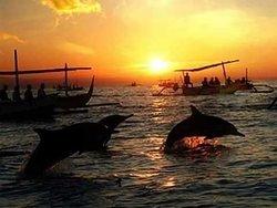 Free and wild dolphin at Lovina beach