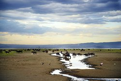 Tanzania Expeditions