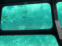 Barco con fondo de vidrio