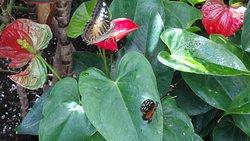 Butterflies on red flowers