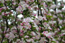 Close up view of some flowering trees