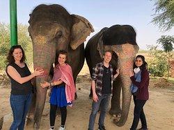 Happy Guests with the elephants at EleSafari!
