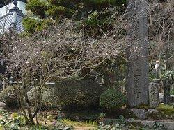 早咲きの桜がチラホラ