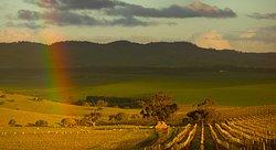 Pindarie Winery