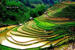 water season rice terraced in May www.tourguidevietnam.com Tony private tour guide vietnam