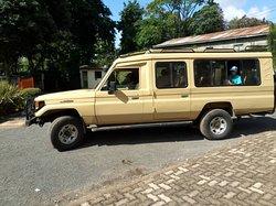 tour to serengeti