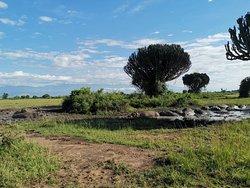 Epic and memorable 7 Days safari with Kajie Safaris in Uganda 🇺🇬