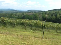 From the top of the vineyard is a beautiful view of the White Mountains. On a good day you can see Mount Washington.