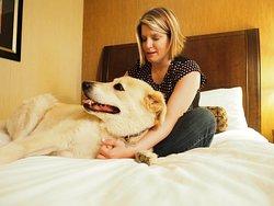 Pet-Friendly Rooms