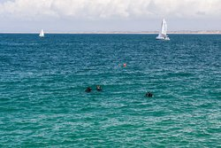 Rich Aquatic Life Make Diving in the Bay Popular