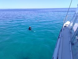 Snorkelling off the side of the catamaran near the reef