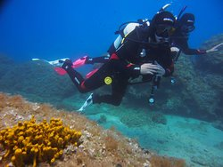 Bikini Dive Home reef
