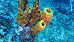 Golden Arrow Technical Diving Center