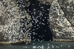 Seabirds abound in the Kenai Fjords National Park