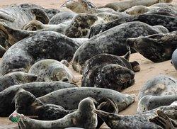 Aberdeenshire Seals
