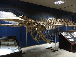Mousio Zoologias Panepistimiou Athinon