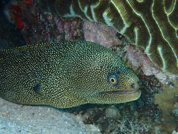 Eel on the sea floor