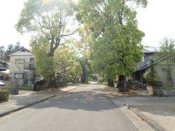入口の鳥居からすぐの参道。この辺りはまだ住宅地ですね。