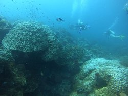 Amazing diving experience