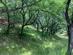 Mt. Hachiman Tomb