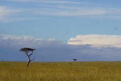 A game viewing paradise
