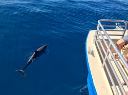 Dolphins love to swim off the bow