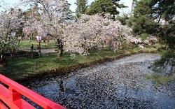 鷹丘橋からの内堀と桜