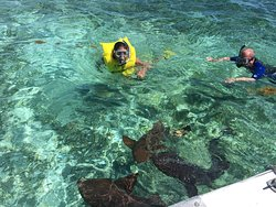 Swimming with nurse sharks.