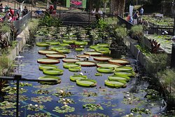 The International Waterlily Collection