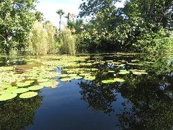 Part of the main lagoon at Murwangi Swamp
