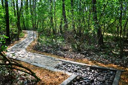 Eco Barefoot Park