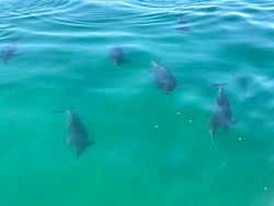 Dolphins 🐬