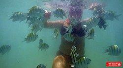 Peixinhos nas Piscinas naturais de Maragogi