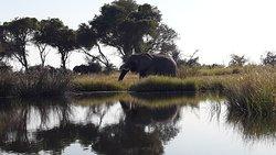 We got so close to the elephants!
