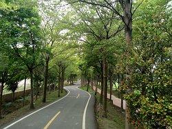 Tanyashen Cycleway