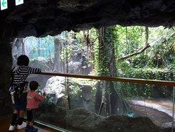 ジャングルミュージアムの写真