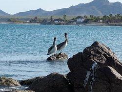 Sea Birds and wild land birds watching its a great excursion !! Observacion de aves es una excursion fabulosa !!